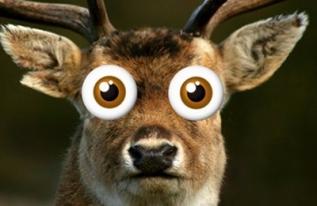 deer-headlight-618x264-e1497539768463
